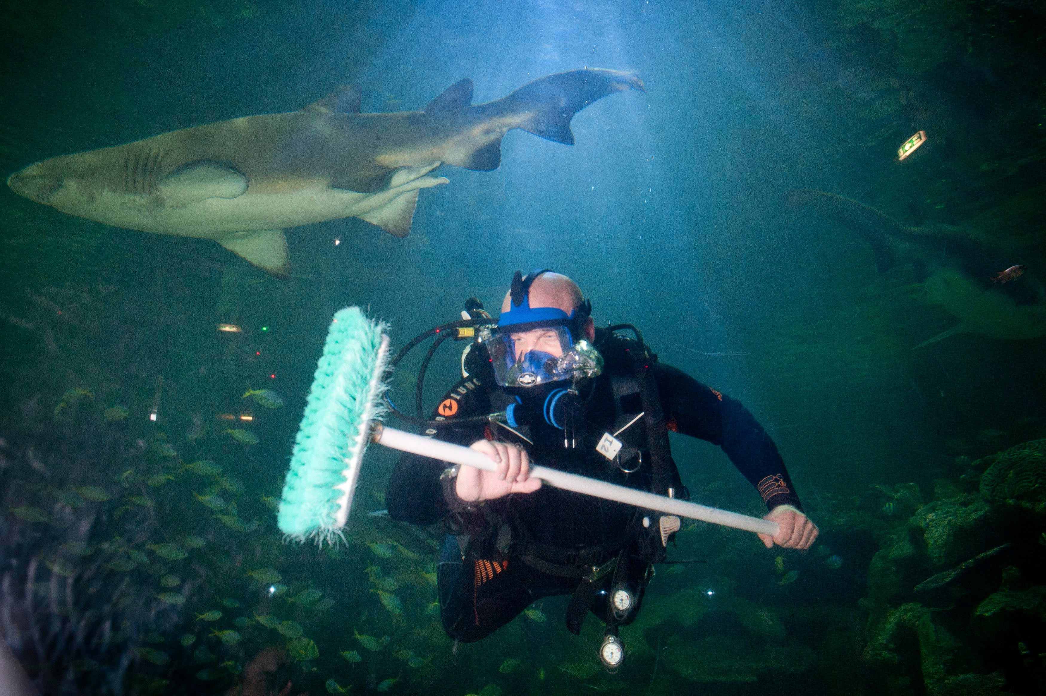 MPM_SHARK_TANK_CLEANER_23